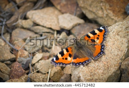 Butterfly with orange, black and white wings sitting on the stone. - stock photo