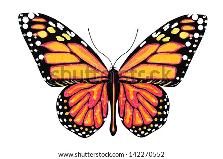 Butterfly with yellow and orange colors on a white background - stock photo
