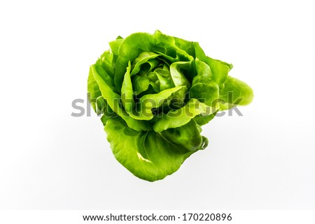 Butterhead salad isolated on the white background. - stock photo