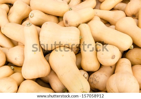 Butternut or winter squash on display at the farmers market - stock photo