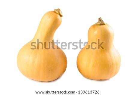 Butternut squash pumpkin - stock photo