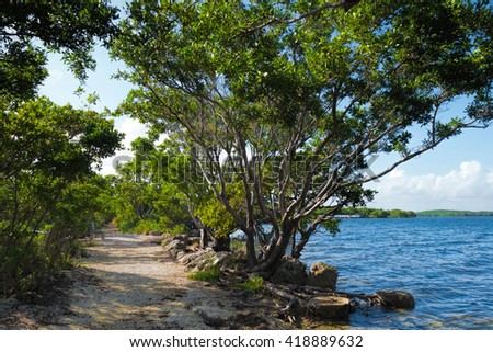 Buttonwood tree on a trail in Biscayne National Park in Florida. Biscayne National Park is for the most part under water and the largest underwater park in the United States. - stock photo