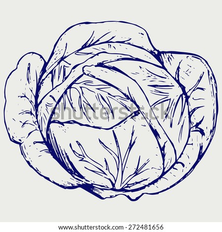 Cabbage. Doodle style. Raster version - stock photo