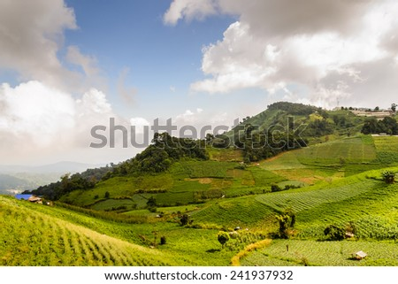 Cabbage field in the mountain,Chiangmai Thailand