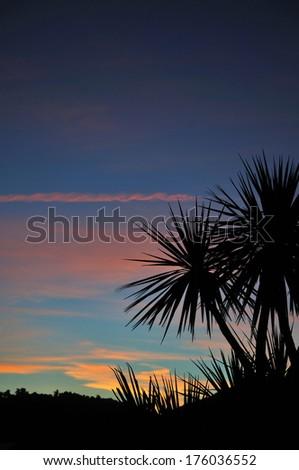 Cabbage tree at sunset, Westland, South Island, New Zealand - stock photo