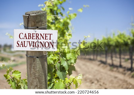 Cabernet Sauvignon Sign On Post at the End of a Vineyard Row of Grapes. - stock photo