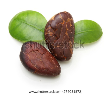Cacao beans isolated on white background - stock photo