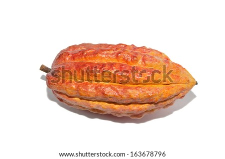 cacao fruits - stock photo