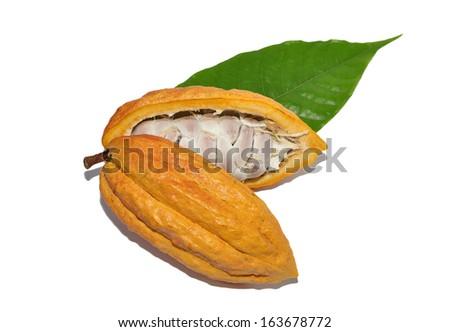 Cacao fruits isolated against white background - stock photo