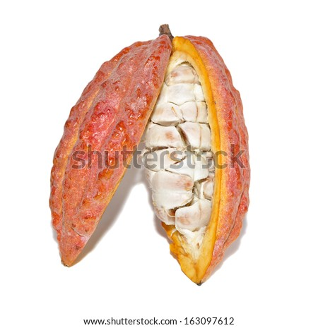 cacao fruits on white - stock photo