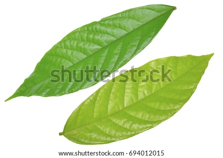 review of related literature of cacao leaves as an insect Disclaimer eol content is automatically assembled from many different content providers as a result, from time to time you may find pages on eol that are confusing.