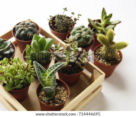 Cacti and succulents in pots A lot of plants To her White background