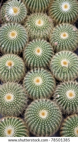 Cactus - stock photo
