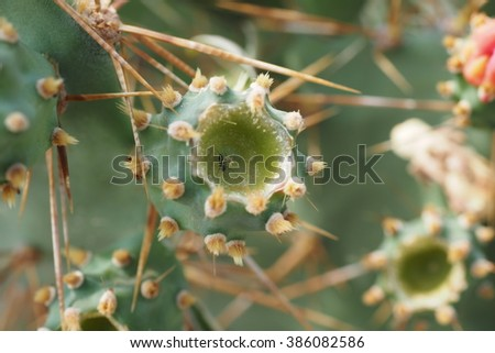 cactus and ant