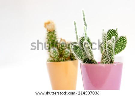 Cactus and colors