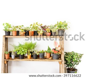 cactus and plant bucket on wooden shelf white wall background