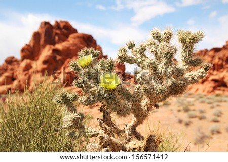 Cactus and red rocks in background at Valley of fire - stock photo