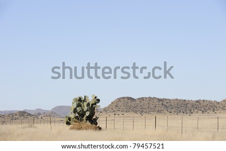 cactus and sheep fence on the road to putsonderwater in the karoo, eastern cape, south africa - stock photo