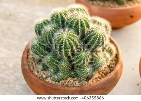 Cactus and succulent on plots, in the nursery plant - stock photo