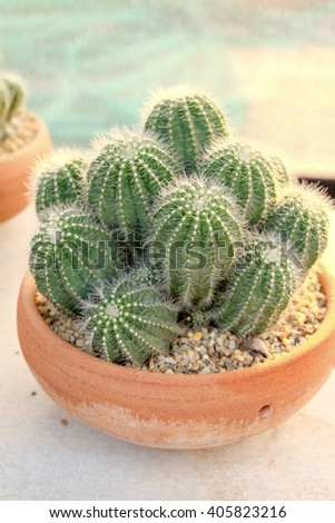 cactus and succulent on plots, in the plant nursery - stock photo
