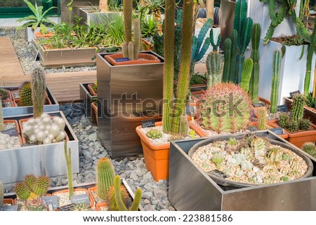 Cactus and succulents plants in a garden - stock photo