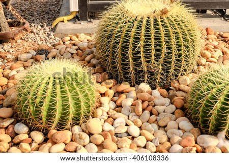 cactus and succulents plot, in the plant nursery - stock photo