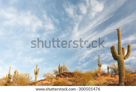 Cactus at Sunrise in Saguaro National Park.