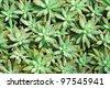 Cactus background plant abstract desert design - stock photo