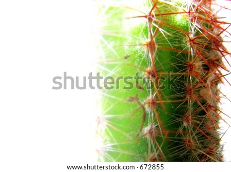 cactus close up with strong lighting