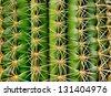 Cactus - closeup - stock photo