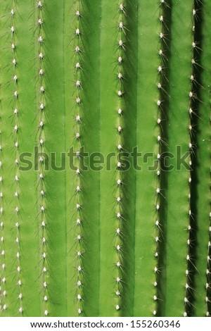 Cactus closeup - stock photo