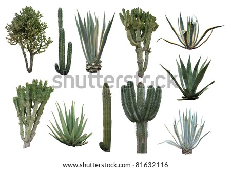 Cactus collection isolated on white - stock photo
