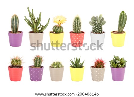 Cactus collection isolated on white background. Aloe and other succulents in colorful ceramic pots - stock photo