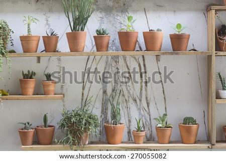 cactus decor - stock photo