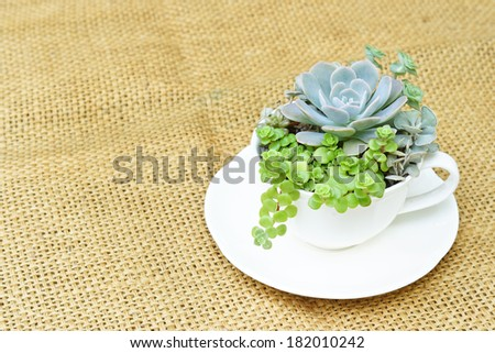cactus decoration in a cup - stock photo