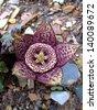 Cactus Flower - stock photo