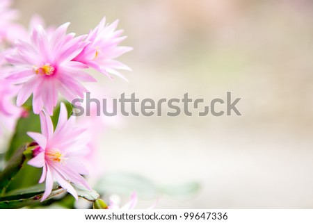 cactus flower background - stock photo