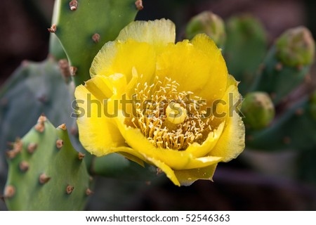 Cactus flower in the blurry background - stock photo