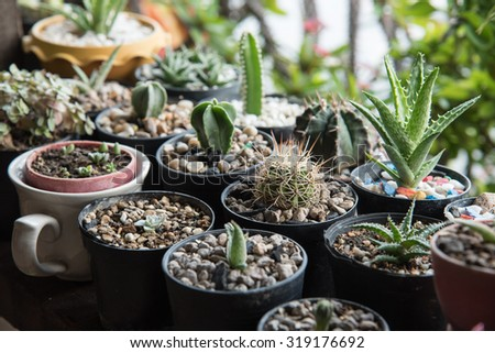Cactus for decorated - stock photo