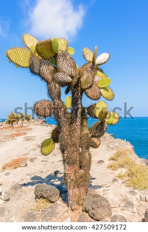 cactus forest and ocean at Galapagos island of Santa Fe.  - stock photo