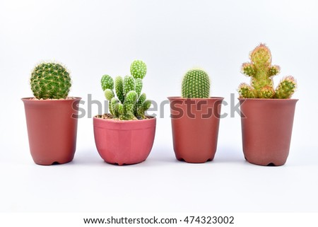 Cactus, Four different varieties of cactus in pots on white background