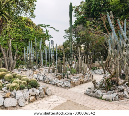 cactus garden stock images, royaltyfree images  vectors, Beautiful flower