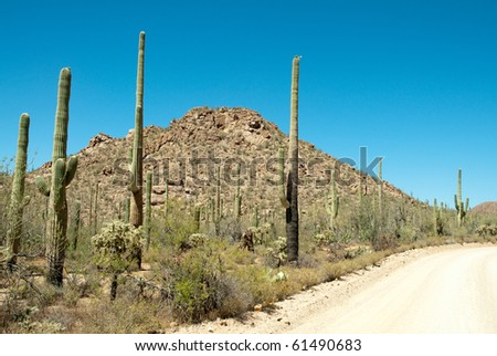 cactus, hills and dirt road - stock photo
