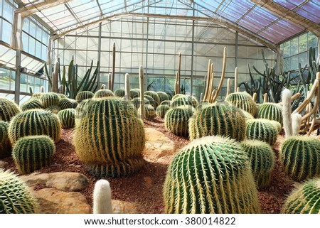 Cactus in a Cactus garden,Queen Sirikit Botanic Garden - stock photo
