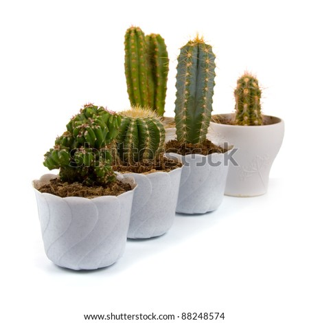 Cactus  in a pots on a white background - stock photo