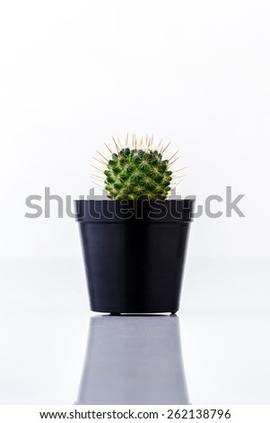 Cactus in black pot isolated on white background - stock photo