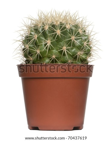 Cactus in front of white background - stock photo
