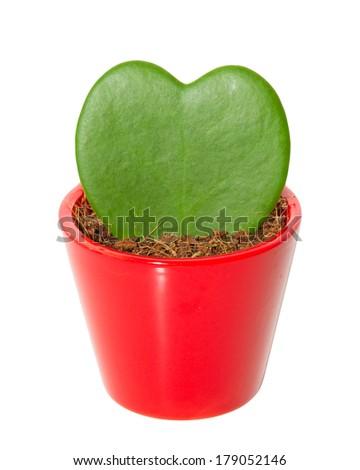Cactus in heart shape - stock photo