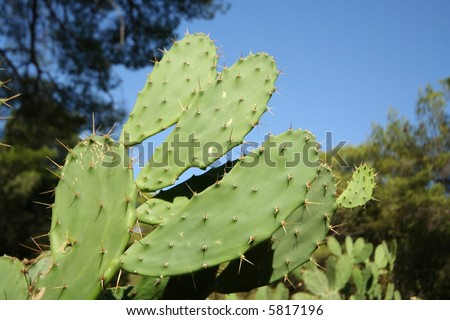 Cactus in Palmizana - stock photo