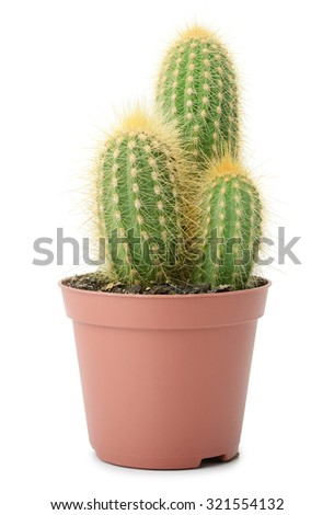 cactus in pot isolated on white - stock photo